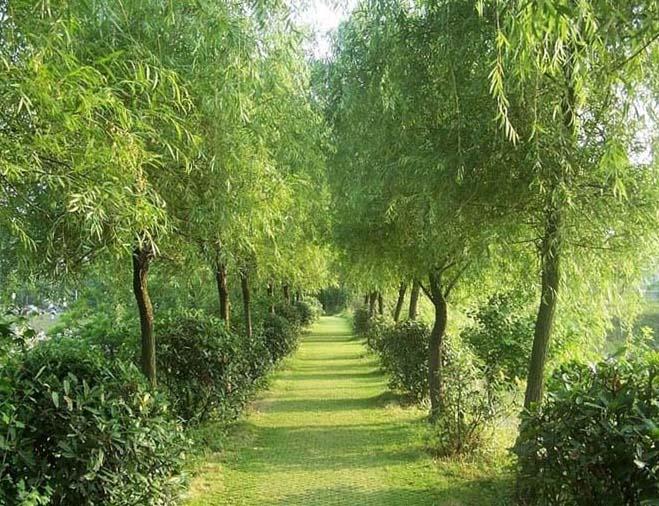 липовый сад фото